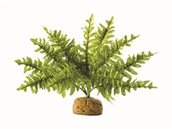 HAGEN EXO TERRA Boston Fern (S) 17cm